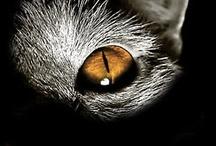Gatitos / Animalitos que me pirran... y son tan fotogénicos...