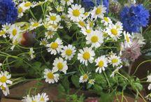 British Flower Week / Celebrating those gorgeous home grown British flowers.
