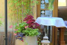 Ogródki kawiarniane / Odpowiednia oprawa florystyczna ma moc podniesienia rangi i renomy każdego lokalu
