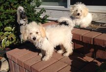 Bishop & Lulu <3 / My dogs