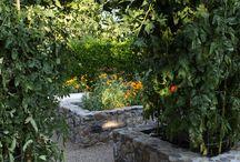 Garden / by Michelle Petrie