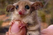 Cuteness / the most lovable animals