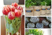 Indoor Garden / Herbs, veggies, fruits for indoor lifestyle.