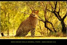 San Diego / by Ann Bidle