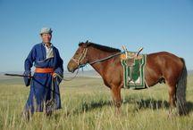 Le Mongol / Considéré comme l'une des races les plus anciennes du monde, le Mongol a énormément influencé la race équine, plus particulièrement en Asie. La quais totalité des chevaux asiatiques ont reçu un apport de sang Mongol à un moment donné de leur élevage. On peut citer notamment, le Tibétain qui lui est très similaire ou bien le cheval mongol chinois.