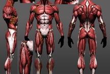 筋肉_資料