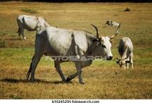 Animals Tuscany