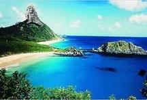 My trip dreams