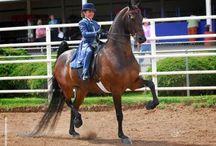 American Saddlebred / by melissa delery