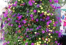 Hanging Floral Baskets