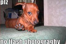 Funny dog photos/ animals