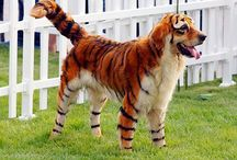 Dog costumes and costume ideas for dogs for Halloween