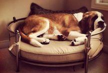 amazing dog beds