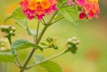 planten voor in mijn nieuwe tuin