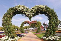 Cvetne korpe u rajskom vrtu