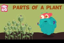 Plants (natural Science) / Resources for Year 1 to teach plants