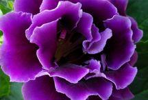 Purple / by Bonnie Suetterlin