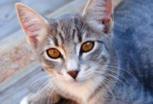 Zdrowie kotów / Wszystko o zdrowiu #kota