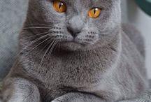 gatti amore
