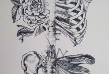 Ribs Skeletons