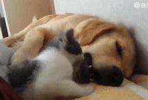 Doggies and kitties