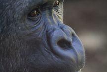 Ashley ML Studios- animals / Photos of animals from ML Studios compalation
