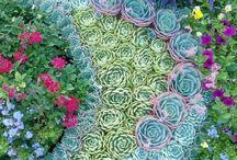 giardini e cactus / la gioia di una pianta viva