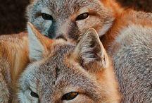 Fuchs OwO