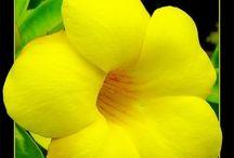 Flores / Lindas imagens de Flores
