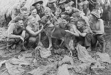 World War 2 History