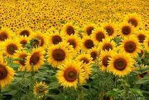 fiori..