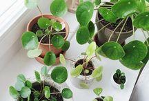 Wonder plants