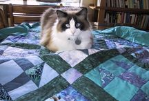 Cats Love To Quilt Too / by Julie Eaves