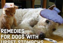 Cats&Dogs Health
