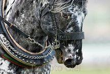 Hester!
