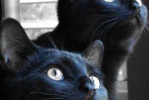kot .... żywy zwierz