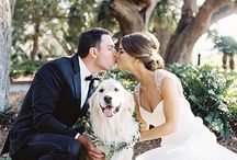 Furry Friends / Here at Shutterbooth we know how important our furry friends are, so we've complied some cute ways to include them in your big day.