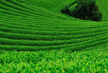 Green....*