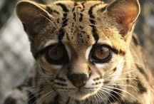 Animals - Cuddly