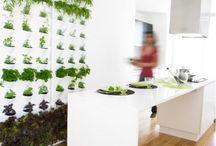 Indoor Herb and Salad Gardems