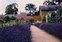 Vegie / Herb gardens