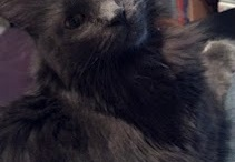 Pretty Kitties - House Cats