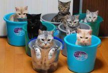 I love kitty cats!!!