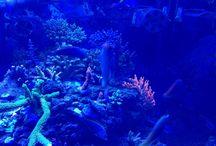 Marine Aquarium _ Ideas and Experiences / Marine Aquarium ideas and experiences from hobbyists. Creating a Marine Aquarium has never been so easy!  Advises for keeping a Marine Aquarium by using the right products.