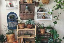 Wicker & Plants