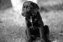 Coco-Pups