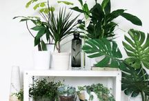 Indoor Plants / Ideas and inspiration for bringing a bit nature or the outdoors into your home.  Use indoor plants to decorate a room and come up with beautiful feature areas.