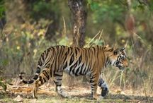 India / by Jetset Extra