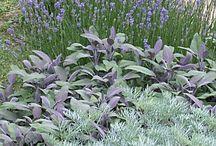 Silverträdgård