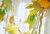 I colori dell autunno! Autumn colors!